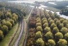 Rows of autumn coloured trees from my drone