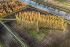 Drone picture of De Groene Kathedraal in autumn