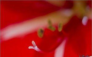 Big flower macro