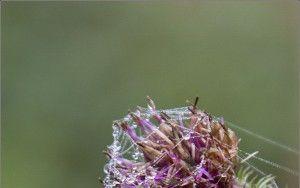 Spider webs and dew