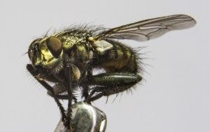 Close-up fly