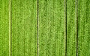 Potato field from my drone