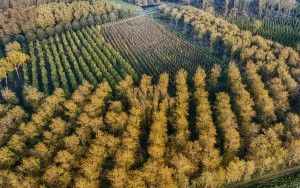 So many trees from my drone