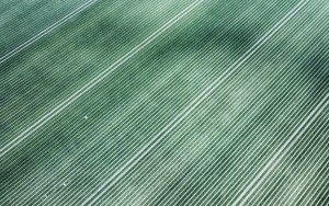 Abstract patterns in a tulip field