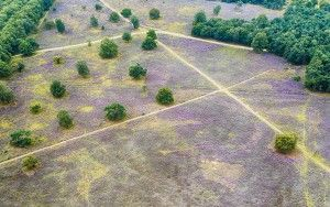 Bussumerheide from my drone
