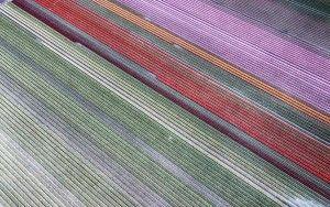 Drone picture of a tulip field near Almere-Haven