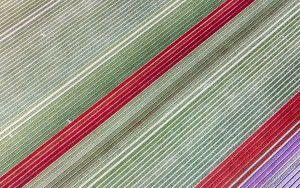 Tulip field from my drone near Almere-Haven