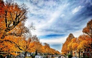 Autumn trees in Amsterdam