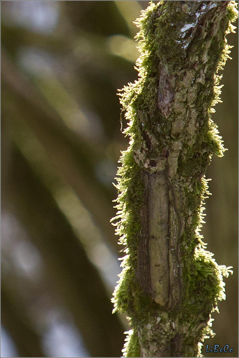 Backlit moss