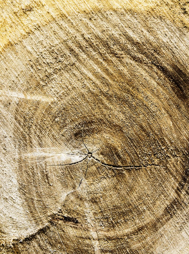 Tree growth-ring