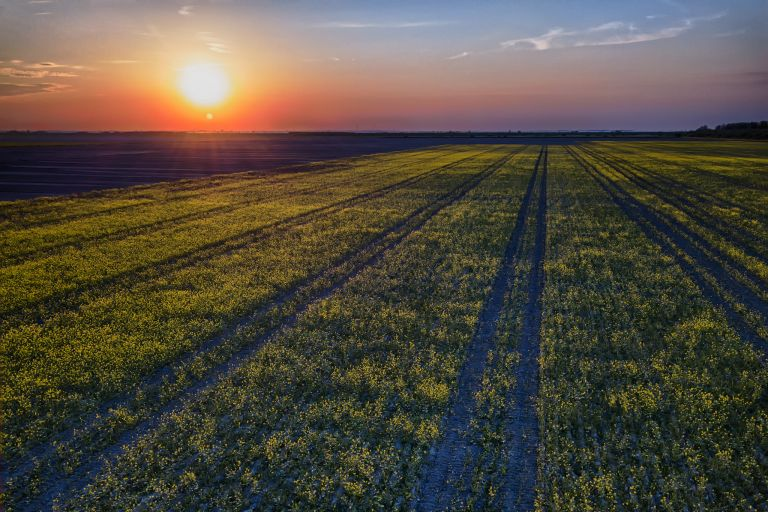 Sunset over colza / rapeseed field