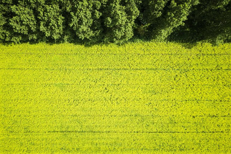 Rapeseed from the air