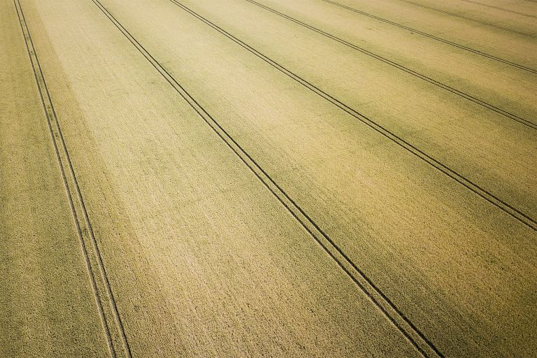 Field of wheat from my drone