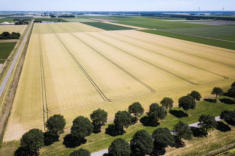 Wheat field from my drone