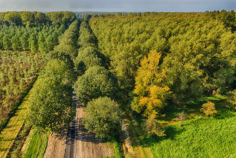 Autumn trees from my drone