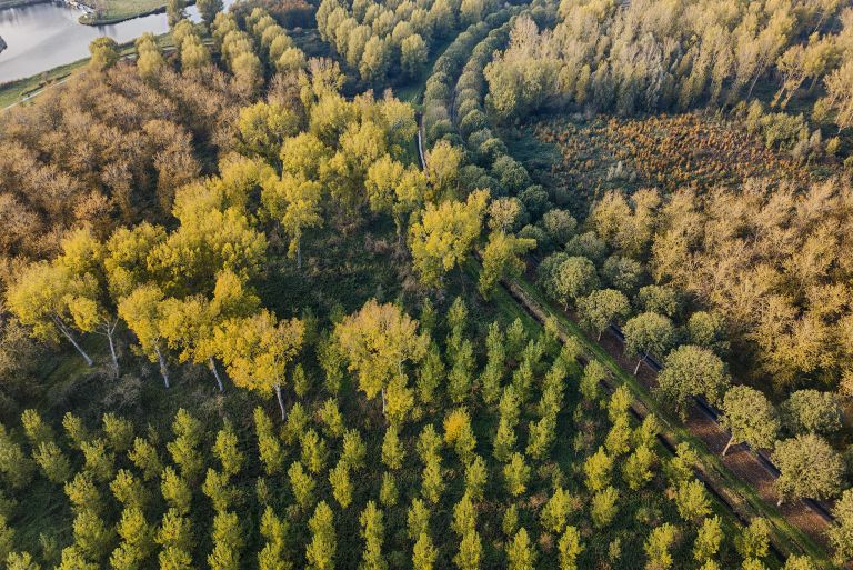 Autumn colours from my drone