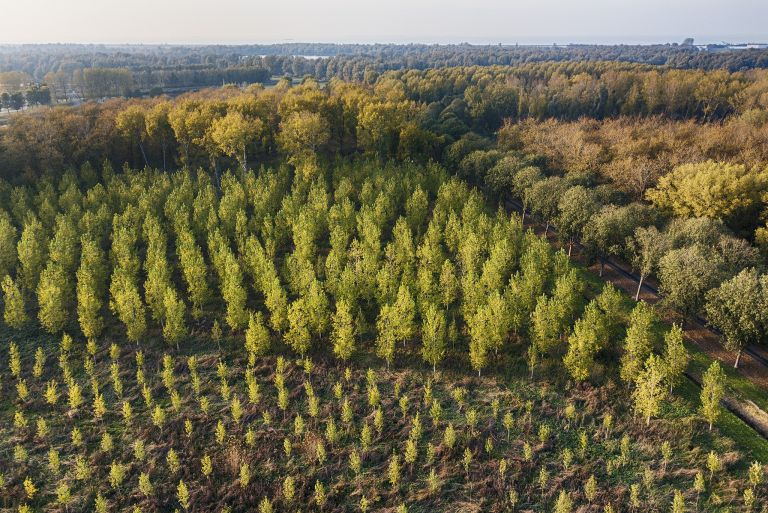 Layers of coloured trees from my drone