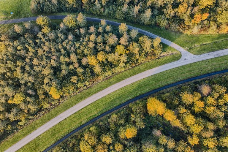 Top-down drone picture of autumn trees