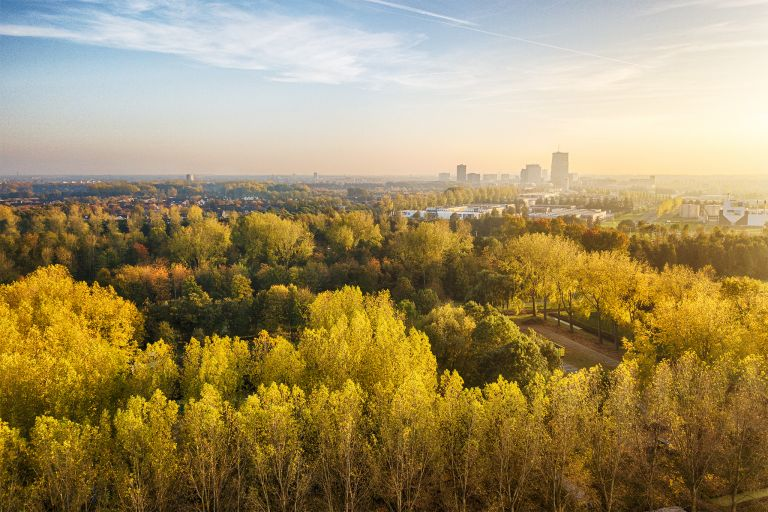 Autumn coloured trees from my drone