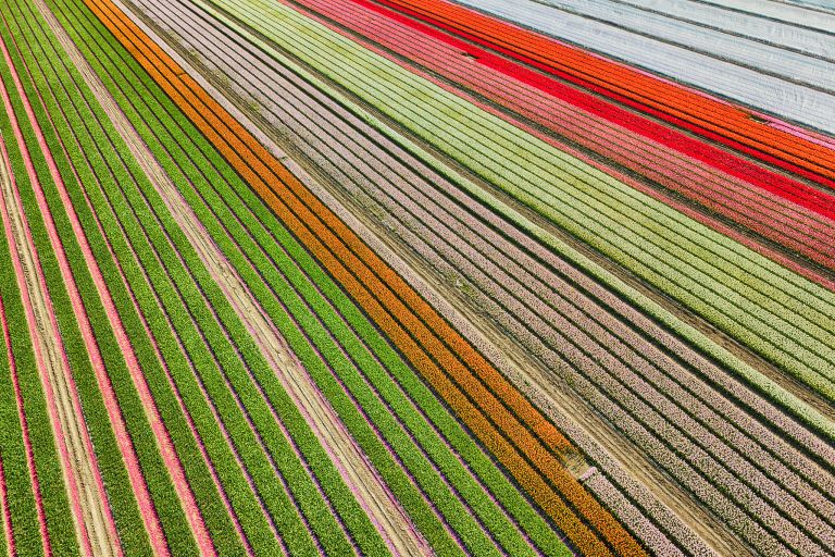 Tulip field near Almere-Haven