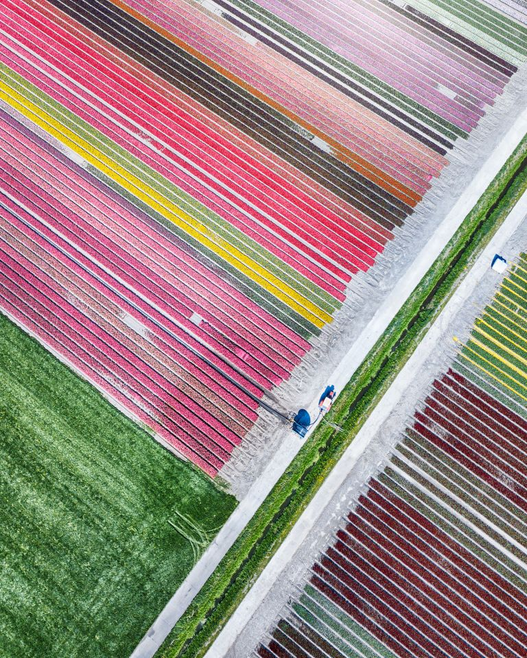Tulip field by drone near Almere