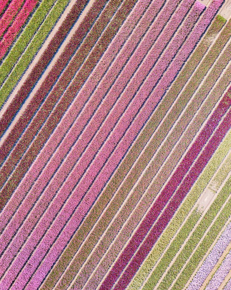 Tulip field by drone near Almere