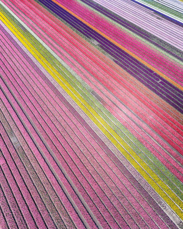 Drone picture of a tulip field near Almere