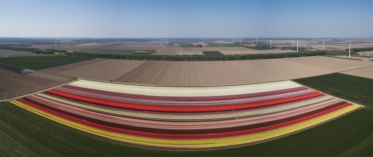 Panoramic drone picture of a tulip field near Almere
