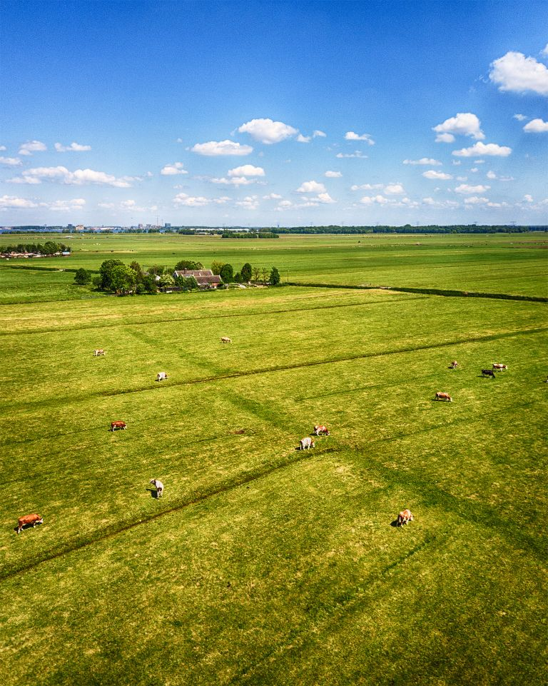 Drone picture of fields with cows