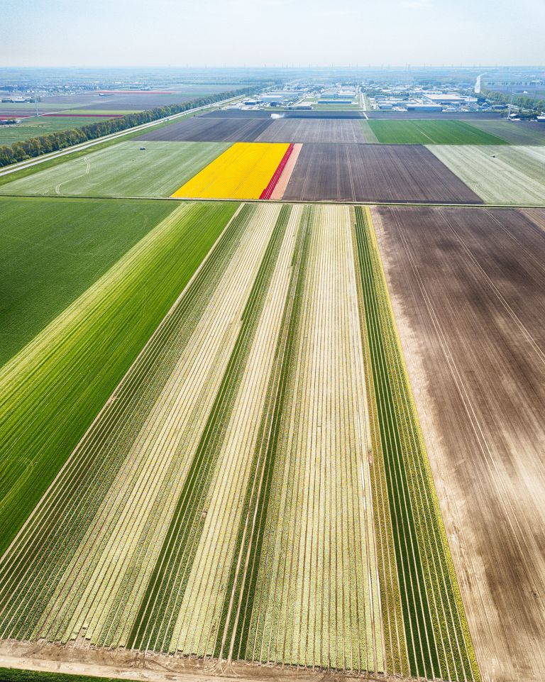 Tulip fields from my drone near Zeewolde