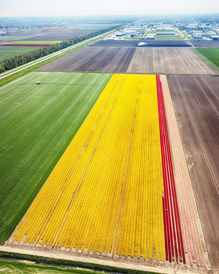 Tulip field from my drone near Zeewolde