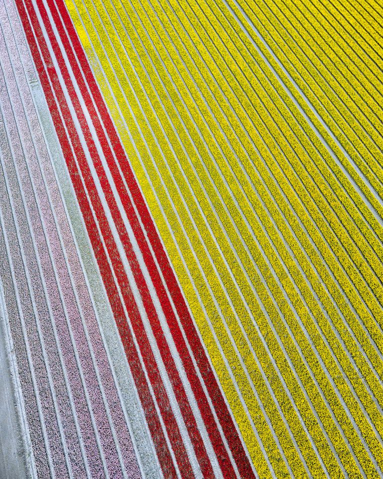 Tulip field from my drone near Zeewolde