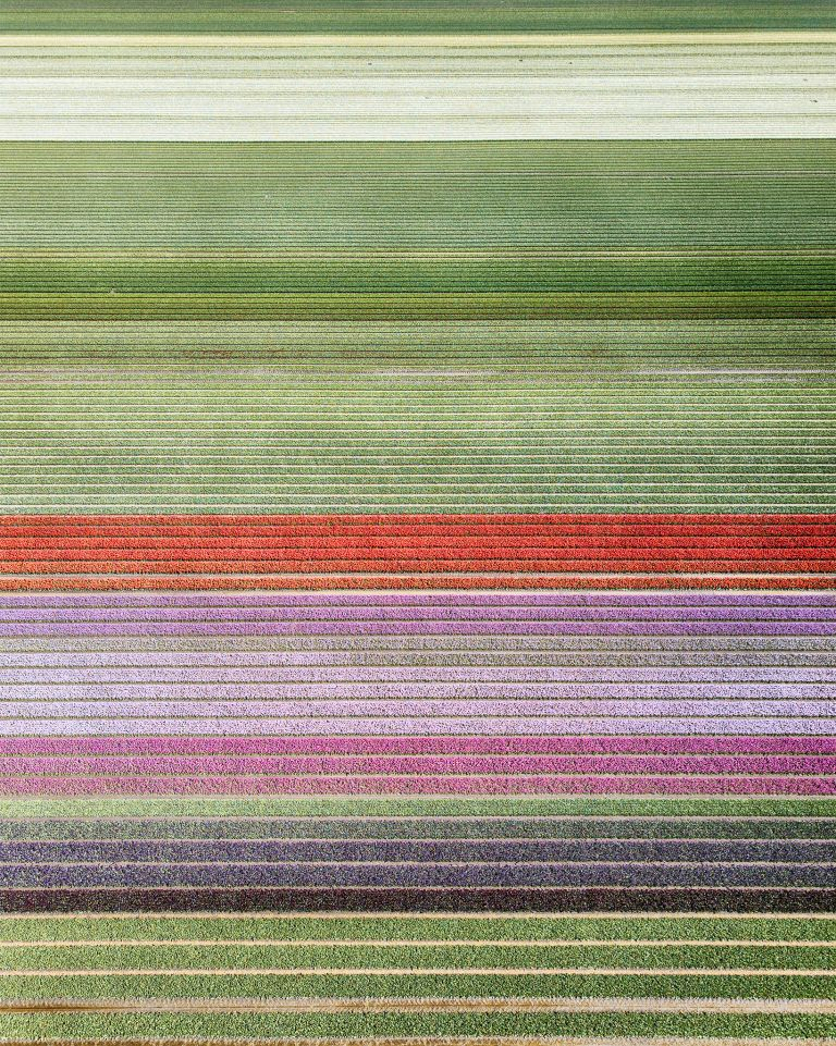 Tulip field next to lake Gooimeer