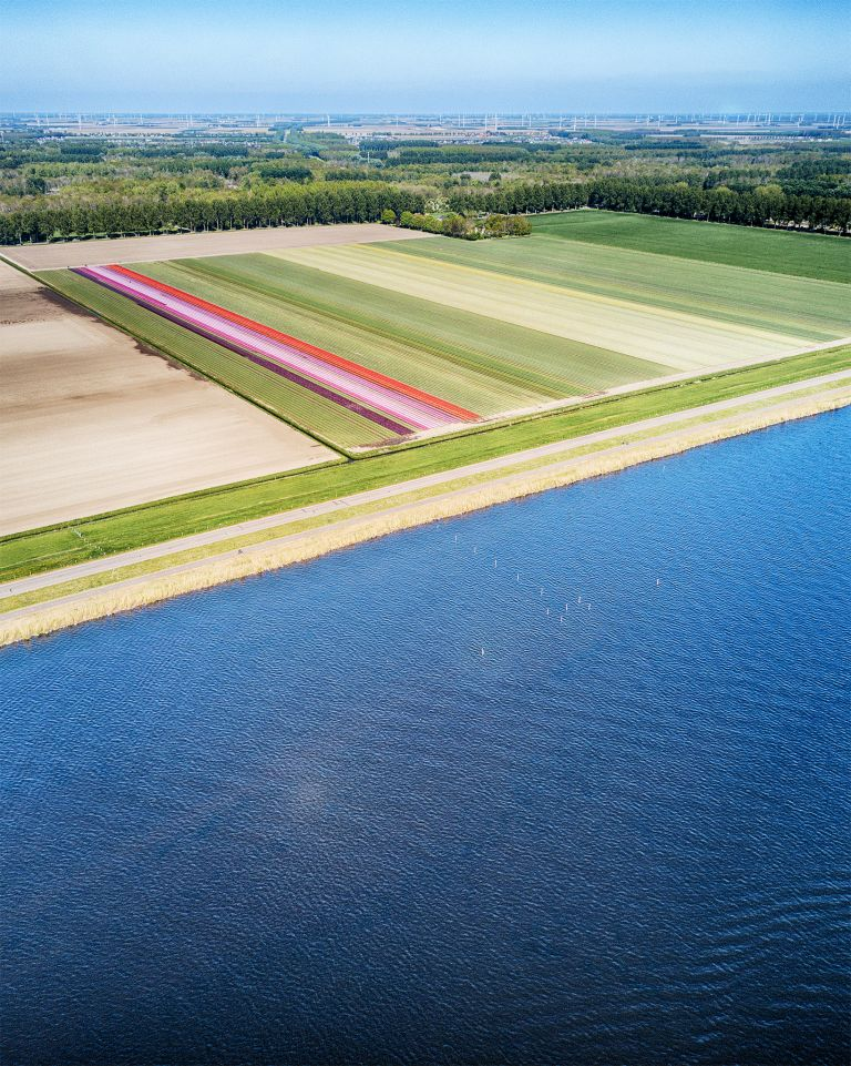 Tulip field next to lake Gooimeer
