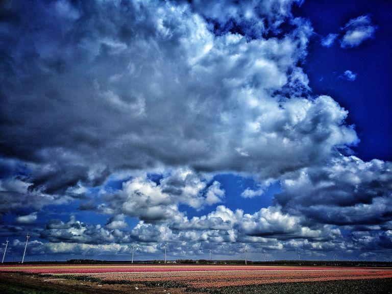 Tulip fields near Almere